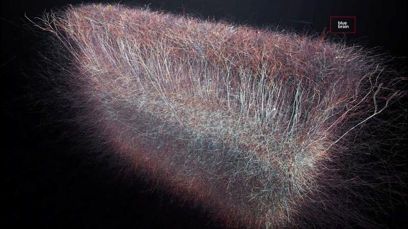 Как вверху, так и внизу: учёные обнаружили в нашем мозгу многомерную вселенную. Blue-b10