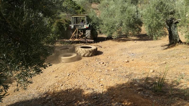 Olivar a finales de verano en Sierra Morena y el alto Guadalquivir - Página 3 Img_2040