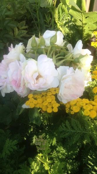 Розы цветут - Страница 4 Img-2021