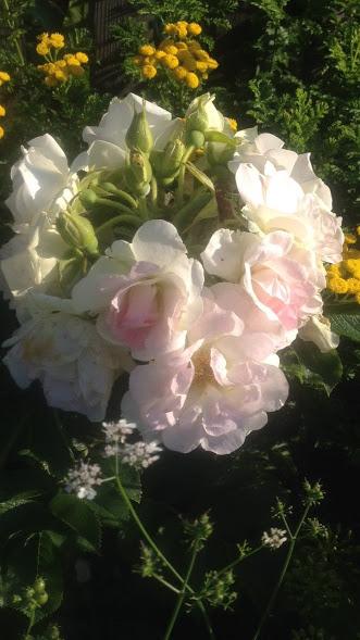 Розы цветут - Страница 4 Img-2022