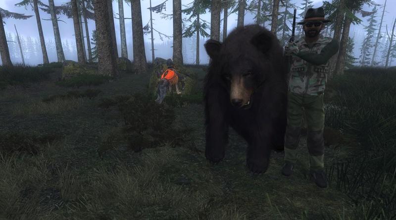 TOP 5 Black Bear // Oso Negro 2017-013