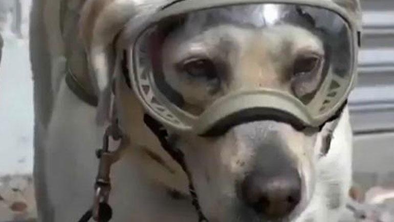 Μεξικό: Η Φρίντα, το σκυλί διάσωσης του Πολεμικού Ναυτικού πρωτοστατεί στην έρευνα για επιζώντες 22803910