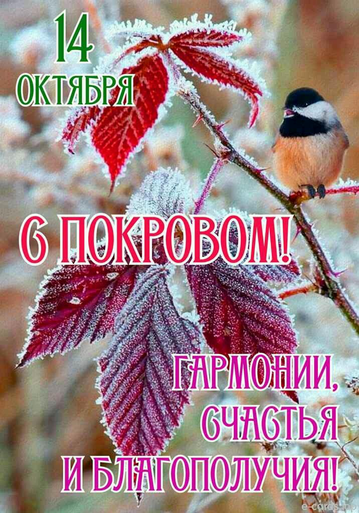 С Покровом!  Img-2013