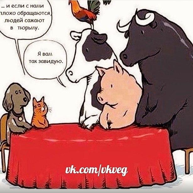 Защитим животных! Jajech10