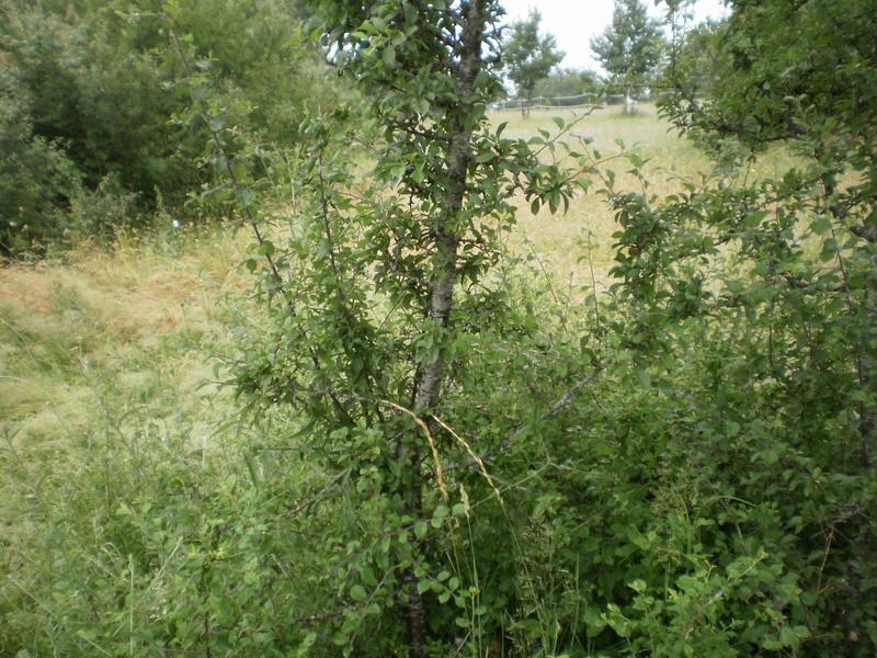 Journal des prairies 2.5 ha : au repos mais fatiguées - Page 5 Ar10