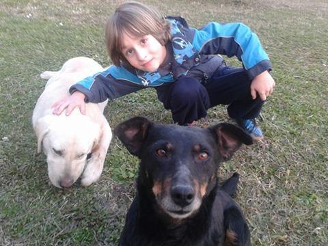 MICI (CRNKA) petite chienne des rues - SERBIE 19965010