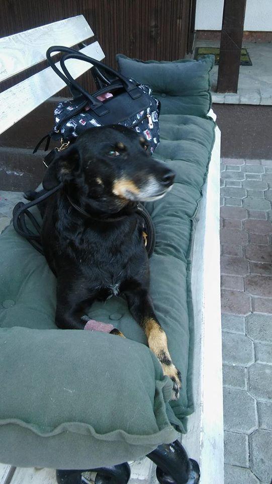MICI (CRNKA) petite chienne des rues - SERBIE 19970510