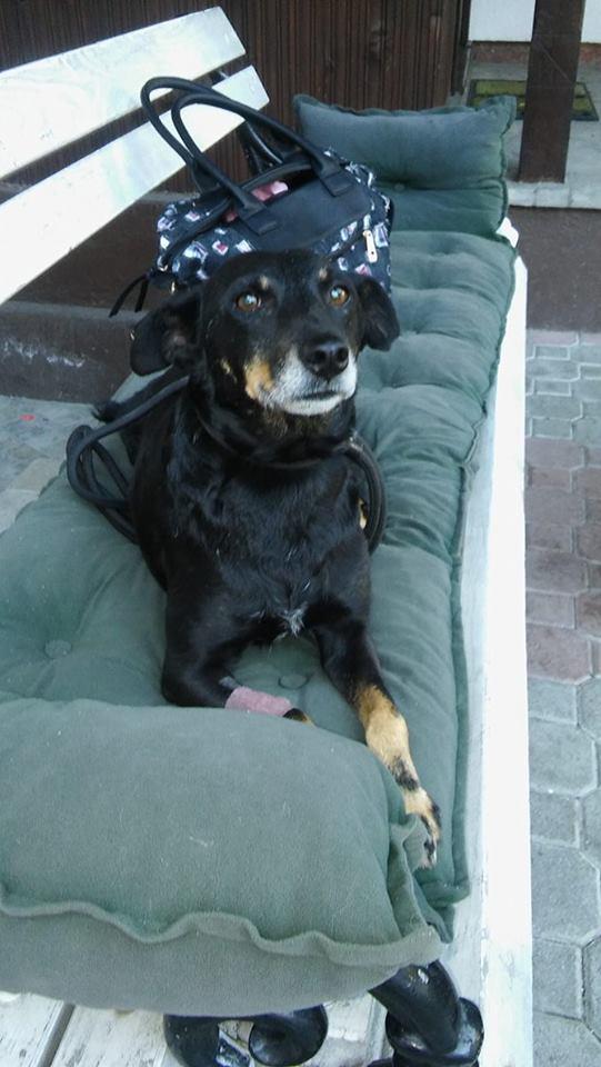 MICI (CRNKA) petite chienne des rues - SERBIE 19970810