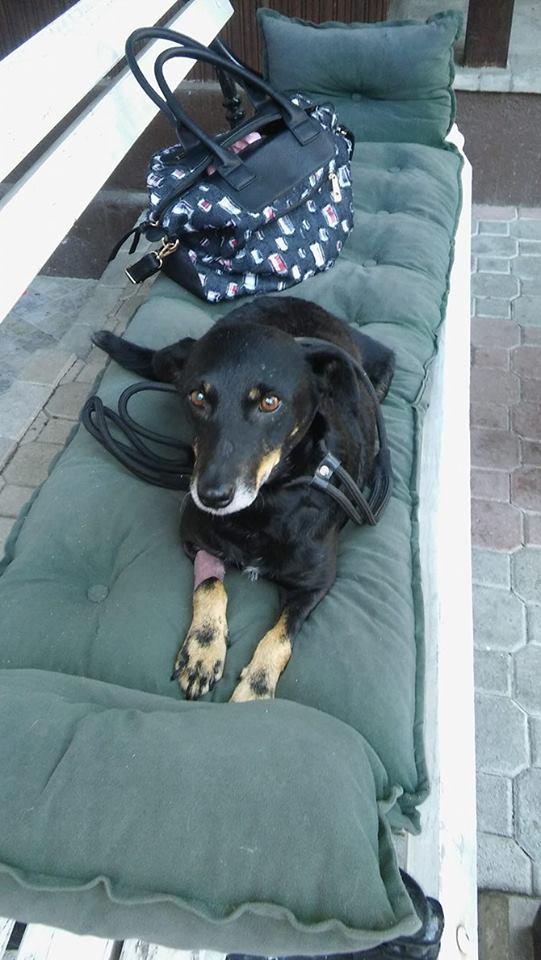 MICI (CRNKA) petite chienne des rues - SERBIE 20030710