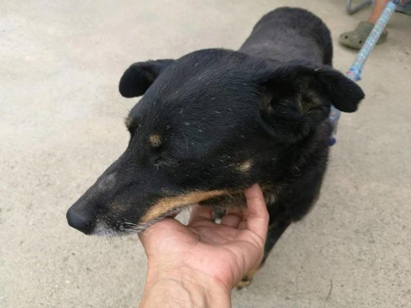 MICI (CRNKA) petite chienne des rues - SERBIE 20370311