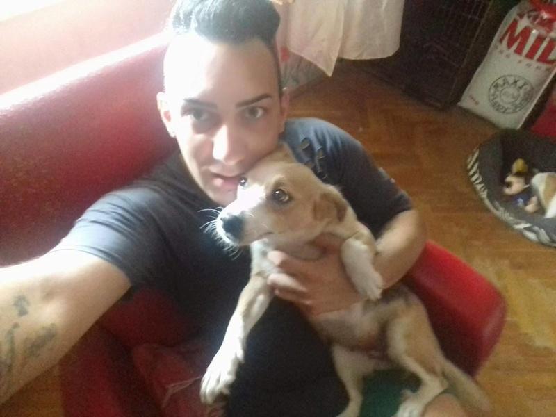 CINCA une petite chienne adorable - SERBIE 20726910