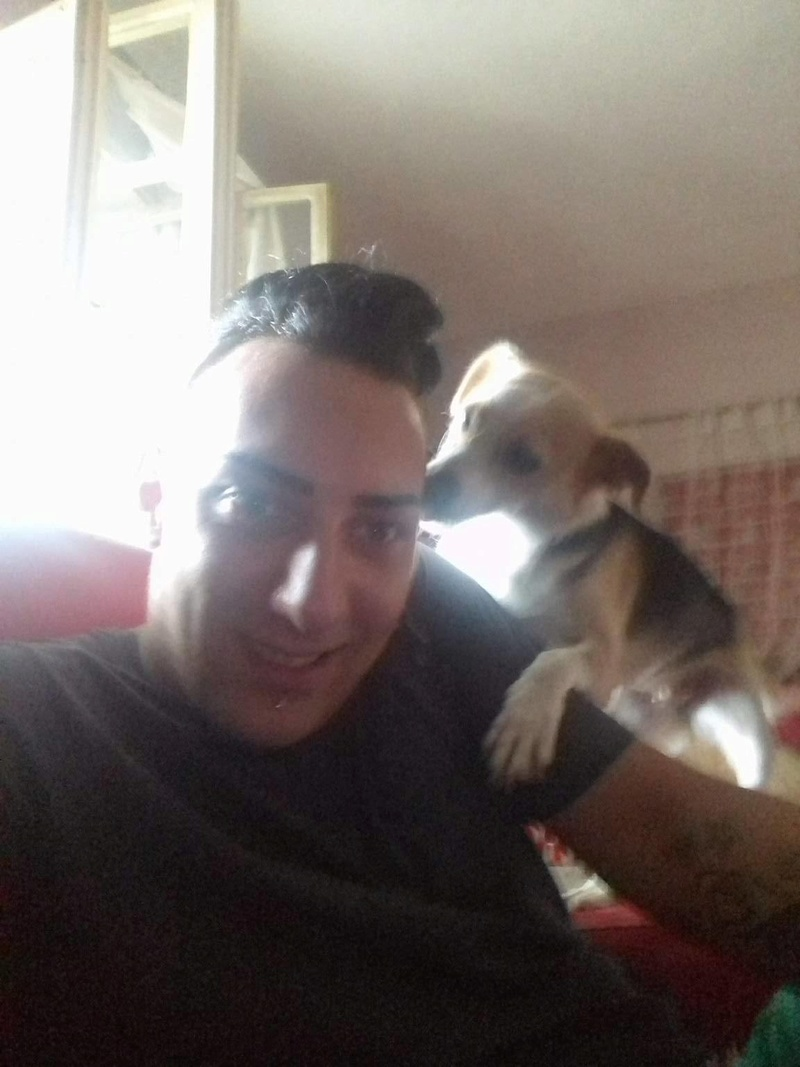 CINCA une petite chienne adorable - SERBIE 20727410