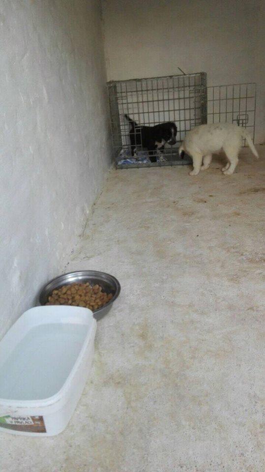 TESS & SHIVA 2 soeurs dans le besoin - BULGARIE 20937810