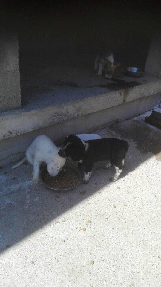 TESS & SHIVA 2 soeurs dans le besoin - BULGARIE 21100510