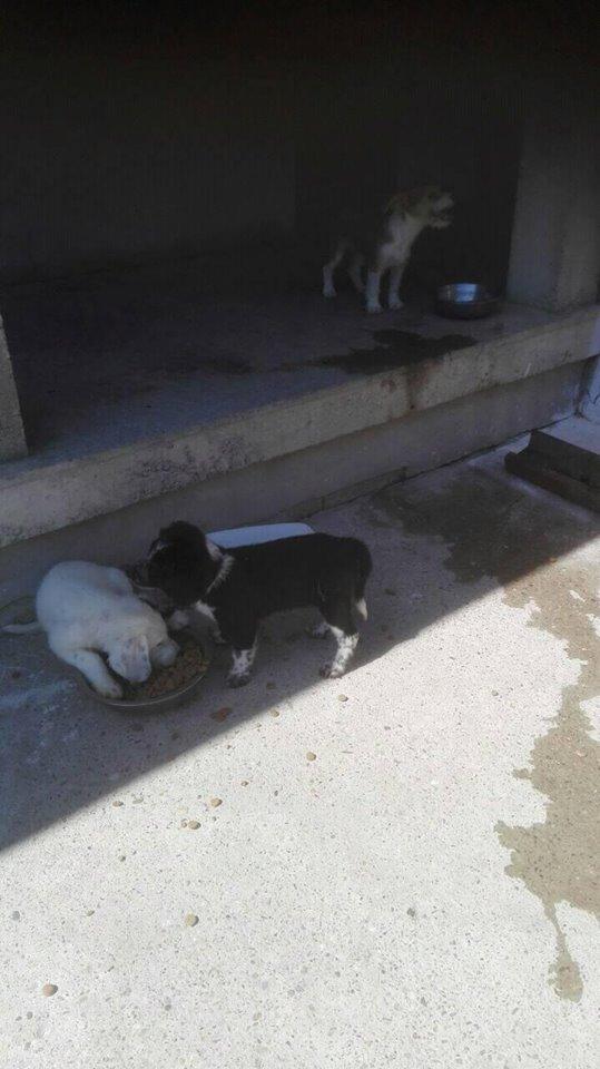 TESS & SHIVA 2 soeurs dans le besoin - BULGARIE 21100710