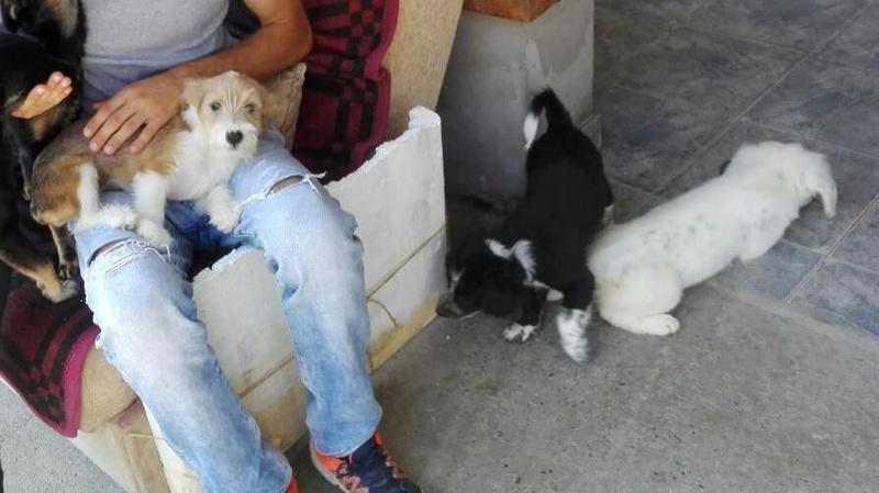 TESS & SHIVA 2 soeurs dans le besoin - BULGARIE 21175813