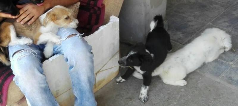 TESS & SHIVA 2 soeurs dans le besoin - BULGARIE 21208711