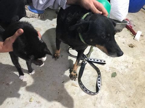MICI (CRNKA) petite chienne des rues - SERBIE 21903811