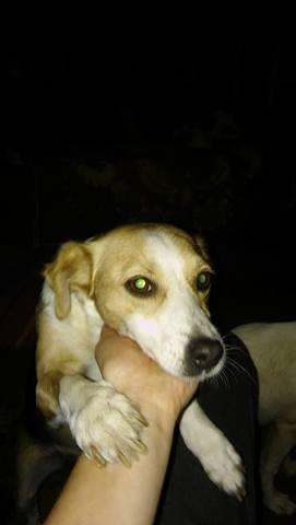 CINCA une petite chienne adorable - SERBIE 21905310