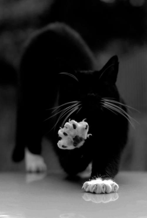 Всемирный День Кошек 13924910
