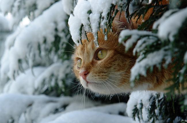 Всемирный День Кошек 55381810