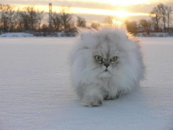 Всемирный День Кошек C7neaf10