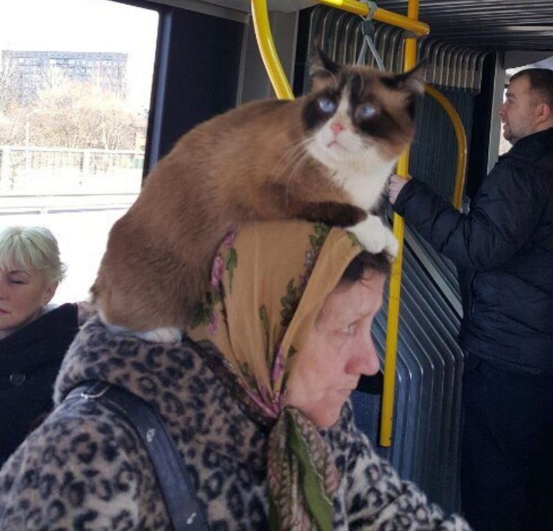 Всемирный День Кошек C_ep3210