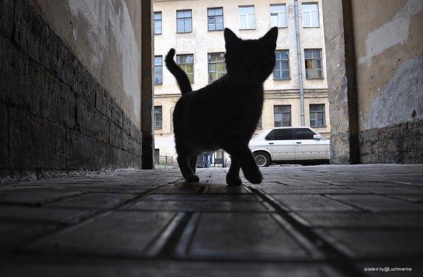 Всемирный День Кошек Ctb4ne10