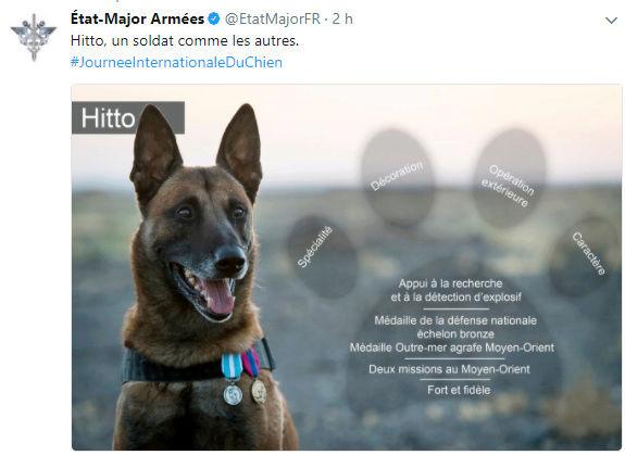 26 août : C'est la journée mondiale du chien !  Hitto_10