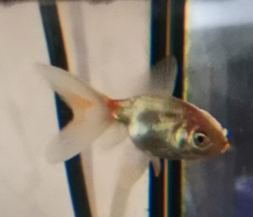 Nom poisson Img_2014