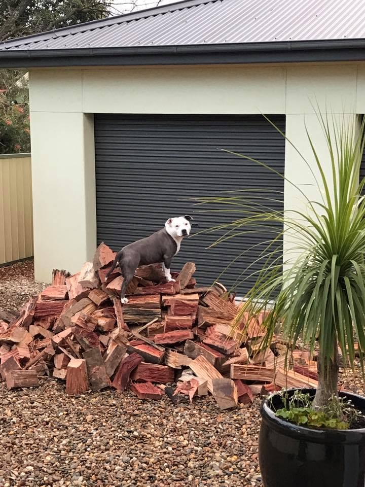 Chief Wood Supervisor !! Wood_210