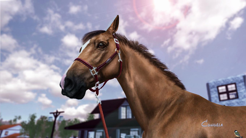 """Фотоальбом """"Best Rider"""" [Много фото; стр 28.] - Страница 27 Screen12"""