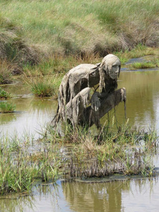 Изучение болотной растительности. 311