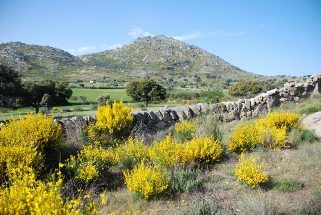 600 piezas prehistóricas, rescatadas de un contenedor de obra en Vigo Cerro_10