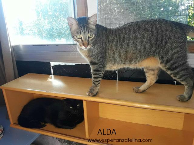 Alda, en busca de hogar ( Álava) ( F.N.aprox:12/15) 20170713