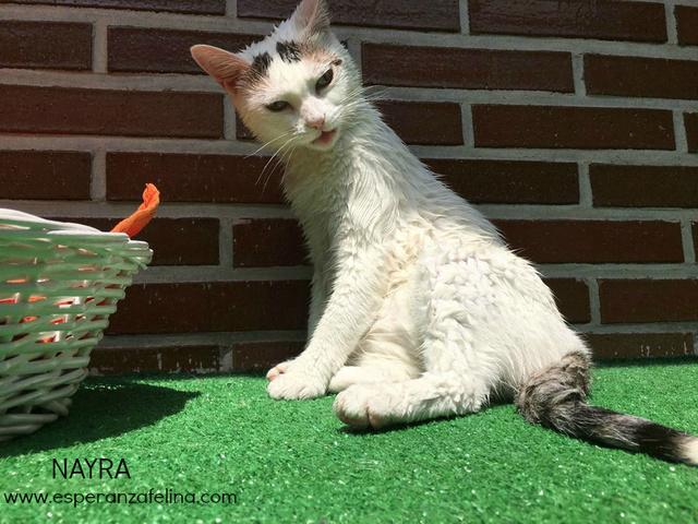 Nayra, gatita de ojos cautivadores en adopción. Alava (Fecha Nac. aprox: 11-08-2015) Img-2011