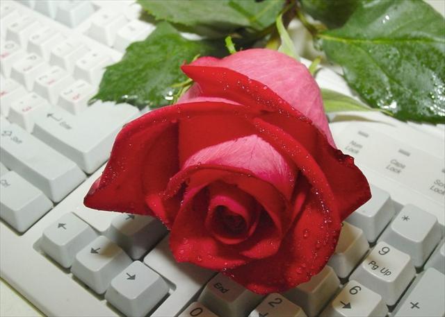 ::Desfile de Rosas AMDA::Hoy se presenta la Rosa Roja AMDA  308_me10