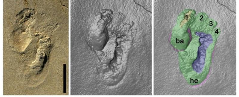 Huellas de 5,7 millones de años desafían la teoría evolutiva humana Huell10