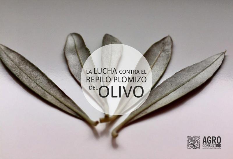 La lucha contra el Repilo plomizo del olivo La_luc10