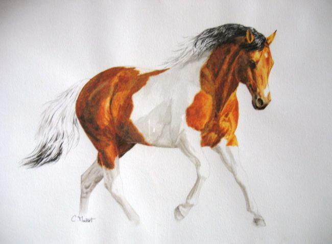 Les animaux peints à l'AQUARELLE - Page 10 04214510