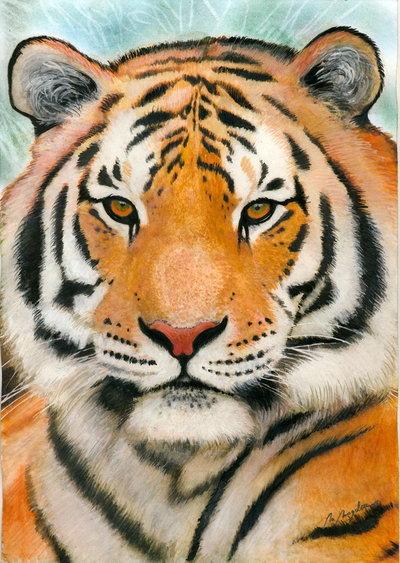 Les animaux peints à l'AQUARELLE - Page 10 Siberi10