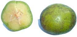 Ѽ❀❀❀Ѽ Экзотические фрукты – кладезь витаминов и минералов  Eaaie_10