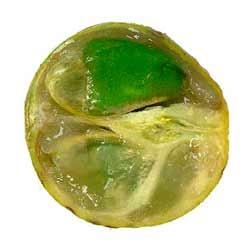 Ѽ❀❀❀Ѽ Экзотические фрукты – кладезь витаминов и минералов  Oa110