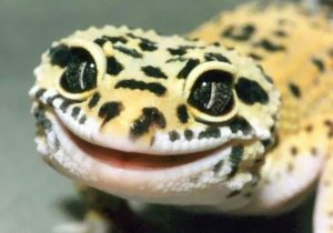 Hope your birthday is as good as a cake. Yummy cake.  Gecko-10