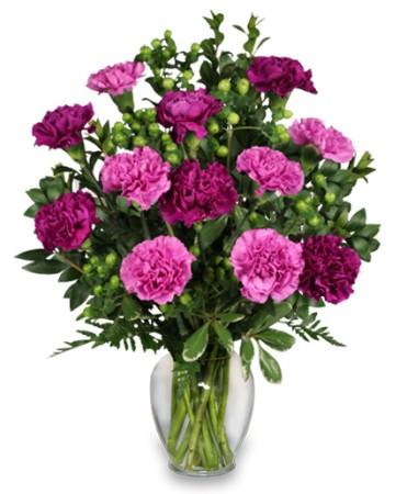 Sự tích hoa cẩm chướng Carnat11