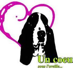 Associations pour basset-hound Coeur_10