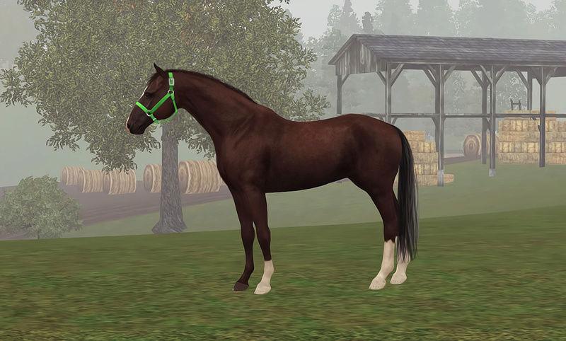 Регистрация лошадей в RHF 2 - Страница 7 Ts3w_217