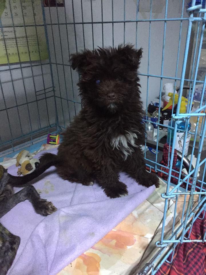 MALIKA, F-XGRIFFON, née 02.2017 environ (TAMARA CLINIQUE) Prise en charge Refuge Pas si bêtes 18119310