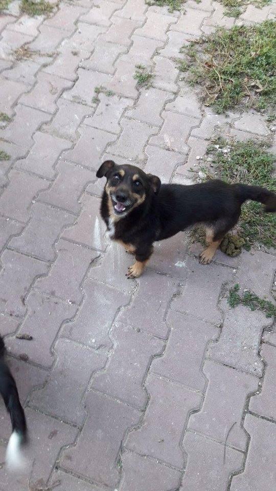 JEAN, M-X, né 2010 (TAMARA/CLINIQUE) Pris en charge Refuge Pas si bêtes 21761810