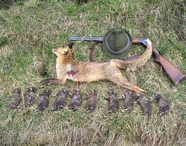 Lov i lovačke priče - Page 16 48025610